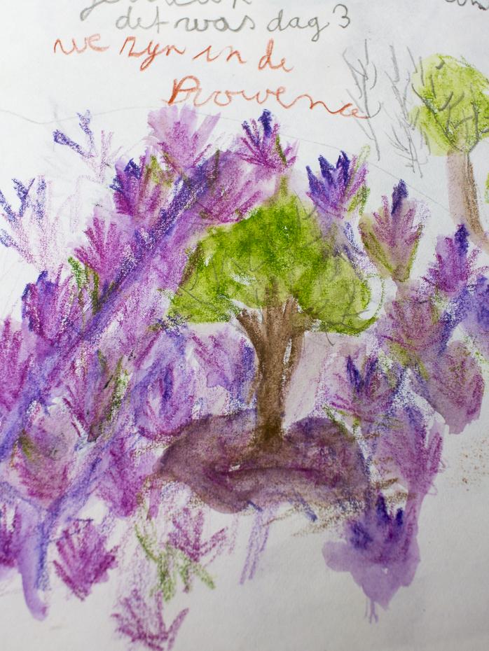 tekening lavendel