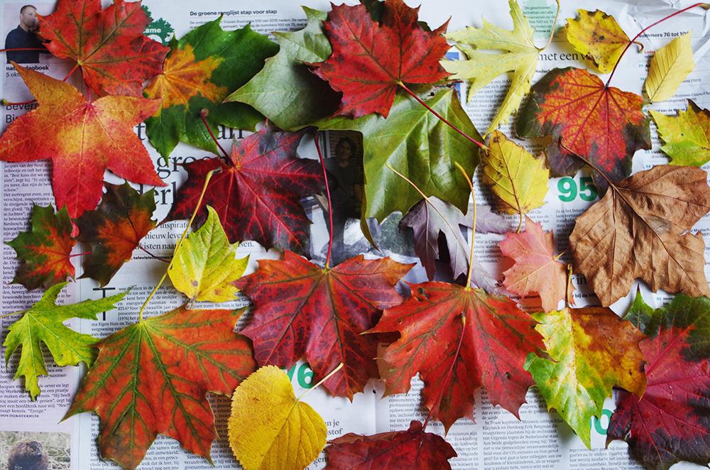 Afbeeldingsresultaat voor herfstblaadjes