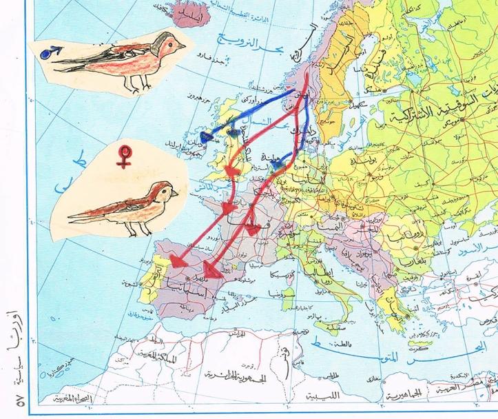 landkaart vinkentrek finches