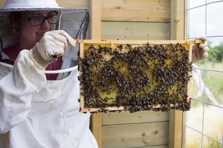 Liesbeth inspecteert een bijenvolk. Wil je ook een keer meekijken? Check dan op www.stadsbij.com wanneer dat kan.